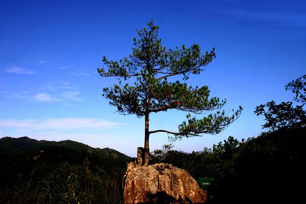 """三百山国家级风景名胜区位于江西省安远县境内,是安远县东南边境诸山峰的合称,地处赣、粤、闽三省交界处,属武夷山脉东段北坡余脉交错地带,是长江水系之贡江与珠江水系之东江的分水岭,是东江的源头,也是全国唯一对香港同胞具有饮水思源特殊意义的旅游胜地。    1993年5月,三百山被国家林业部批准为国家级森林公园;1995年7月被江西省人民政府列为省级重点风景名胜区;2000年6月被全国保护母亲河工作领导小组命名为""""首批全国保护母亲河行动""""生态教育示范基地;2002年5月被国务院批准"""